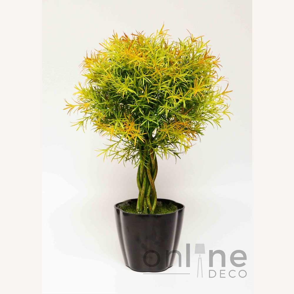 Planta topiario helecho en maceta online deco - Plantar en maceta ...